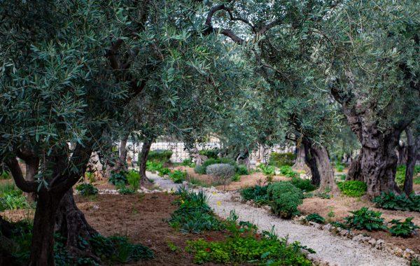 Jeruzalem tuinen